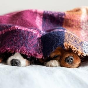 これで安心! 犬が洋服を嫌がる理由と対処法