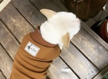 Wavy Turtel Neck French Bulldog